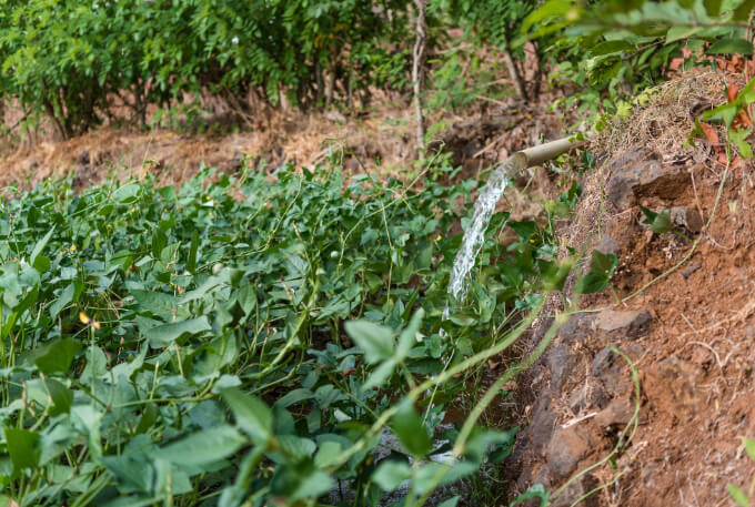 Irrigation projects brought water directly from the rivers to the fields