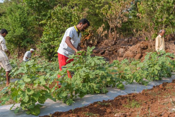 Organic farming has successfully taken root